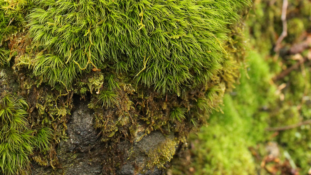 Save the Moss, Save the World