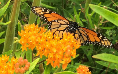 Attract Butterflies and Moths to Your Garden